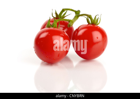 Three fresh cocktail tomatoes mirrored and covered with water droplets - Stock Photo