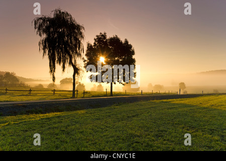 meadows and silhouettes of trees in early morning fog at sunrise, Germany, Saxony, Vogtland, Vogtlaendische Schweiz - Stock Photo