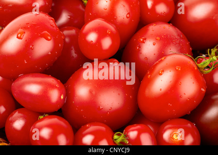 Fresh organic tomato with water droplets - Stock Photo