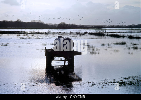 cattle watering tank on flooded pasture, Germany, Lower Saxony, Osterholz, Worpswede - Stock Photo