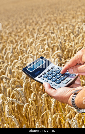 bread wheat, cultivated wheat (Triticum aestivum), farmer with pocket calculator in the hands over a mature wheat - Stock Photo