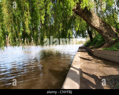 Weeping willow tree along the River Severn, UK - Stock Photo