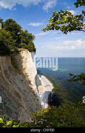 chalk cliff coast, Germany, Mecklenburg-Western Pomerania, Jasmund National Park - Stock Photo