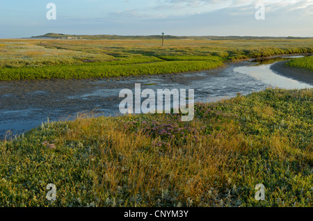 tideway through a salt meadow, Netherlands, Northern Netherlands,  Texel - Stock Photo