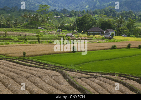 rice terraces in fertile valleys, Indonesia, Bali - Stock Photo