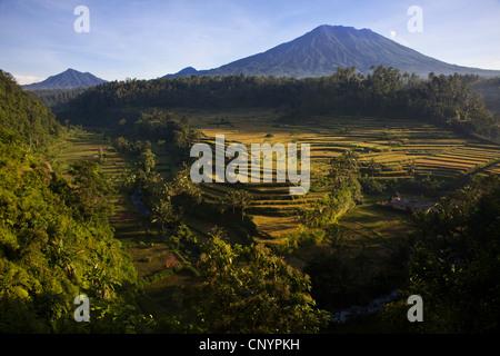 rice fields and volcano Gunung Agung, Indonesia, Bali, Mahagiri - Stock Photo