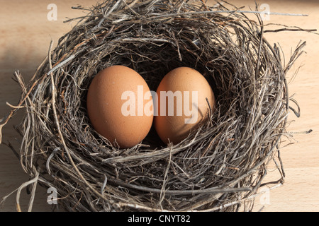 Two brown eggs in a bird's nest - Stock Photo