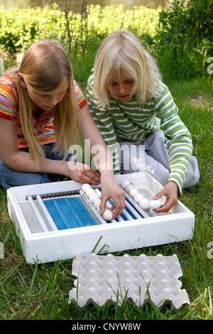 two children sorting hen's eggs into breeder, Germany - Stock Photo