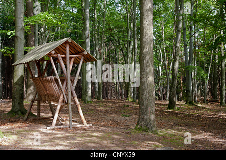 manger in a beech forest, Germany, Thueringen, Geogenthal - Stock Photo