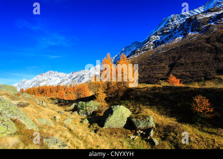 valley Loetschental with larches in autumn, Switzerland, Valais - Stock Photo