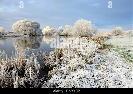 Elbe landscape covered with hoar frost, Germany, Kirchwerder, Hamburg - Stock Photo
