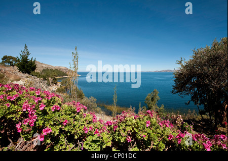 view from the blooming shore down the cliffs at Lake Titicaca, Peru, Taquile Island, Lake Titicaca - Stock Photo