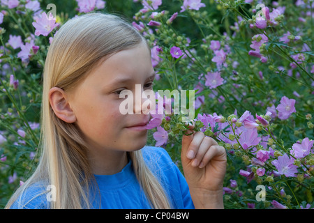 hollyhock mallow, large-flowered mallow, pink mallow, vervian cheeseweed (Malva alcea), girl smelling at mallow - Stock Photo