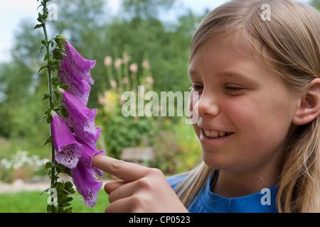 common foxglove, purple foxglove (Digitalis purpurea), girl sticking her finger in a blossom of the common foxglove, - Stock Photo
