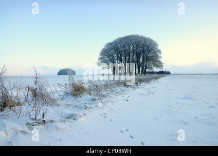 Winter morning scene on the Marlborough Downs with fresh windswept snow on the ground and animal tracks in the foreground - Stock Photo
