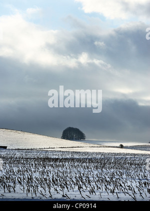 Sunlight pooling on snowy fields in the distance on the Marlborough Downs near Avebury with wheat stubble in the - Stock Photo