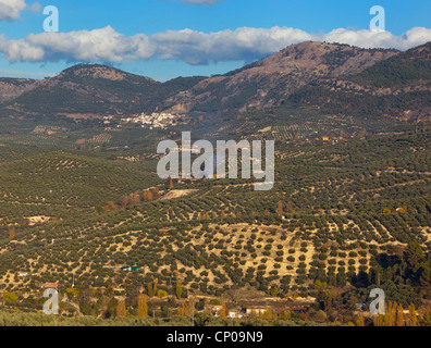 Olive groves near Cazorla,Jaen Province, Andalusia, southern Spain. - Stock Photo