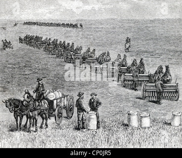 A bonanza farm, a phrase used in US in the 1870s, referred to very large farms harvested mostly wheat, being seeded - Stock Photo