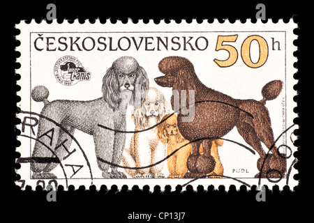 Postage stamp from Czechoslovakia depicting poodles - Stock Photo