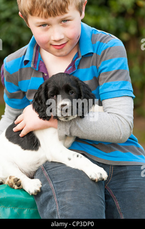 An eight year old boy with his eight week old English Springer Spaniel puppy dog in the Uk - Stock Photo