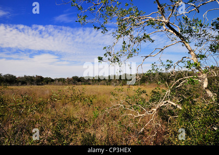 Merritt Island national Wildlife Refuge provides habitat for a variety of birds and other animals - Stock Photo
