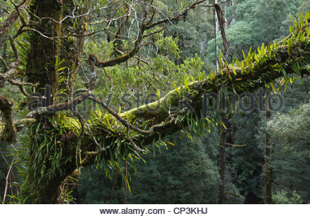 View from the Otway Fly Tree Top Walk on the Great Ocean Road, Victoria, Australia - Stock Photo