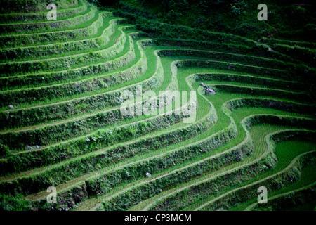 Rice Terraces - Stock Photo