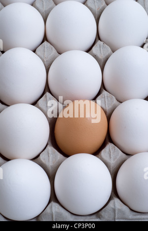 White eggs with a brown egg, conceptual images. - Stock Photo