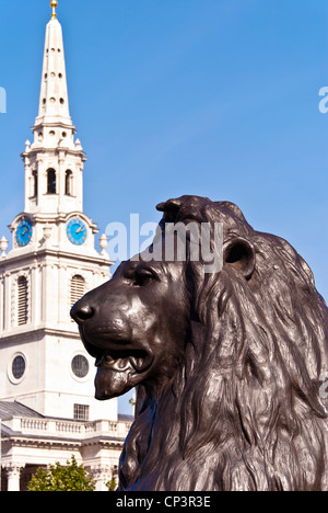 St.Martin-in-the-fields church and Trafalgar square lion, London, England, UK - Stock Photo