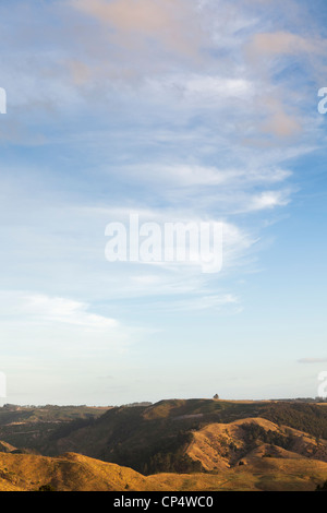 A pastoral scene with blue sky, fluffy clouds, and golden grass fields in northern New Zealand - Stock Photo