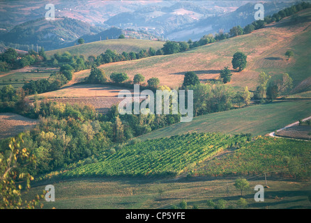 Emilia Romagna - Vineyards in Castel San Pietro Terme and Sassoleone. - Stock Photo