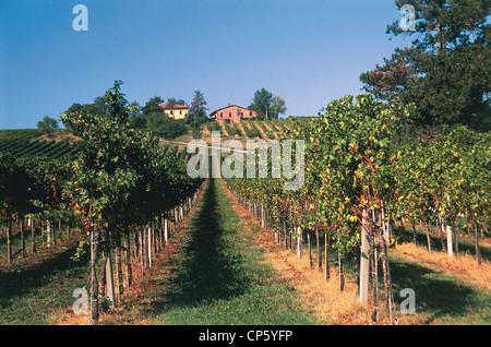 Emilia Romagna - Vineyards in Castel San Pietro Terme (Bo) and Sassoleone (Bo) - Stock Photo