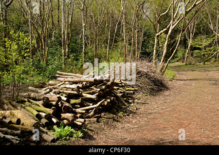 A pile of cut logs from some clearing work in a forest in Cheshire UK - Stock Photo