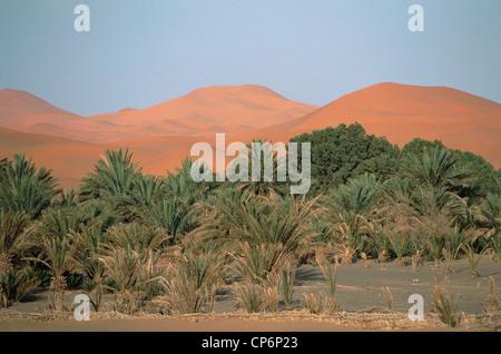 Morocco - Er Rachidia Province - Valley of the Ziz - Tafilalt - Merzouga. Desert landscape with sand dunes and palm - Stock Photo