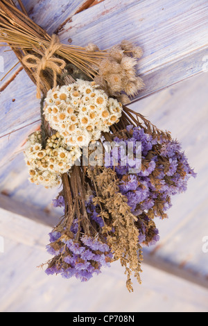 Dried flowers arranged and hung in a potting shed at RHS Garden Harlow Carr - Stock Photo