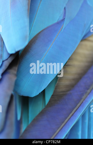 close up of a blue parrots feathers - Stock Photo