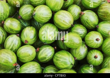 Ribes uva-crispa, Gooseberry, Green, Green. - Stock Photo