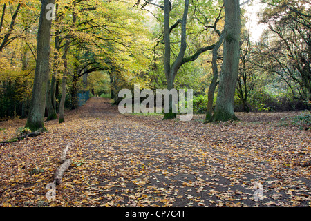 Autumnal Landscape taken at Bentley Priory Nature Reserve. - Stock Photo