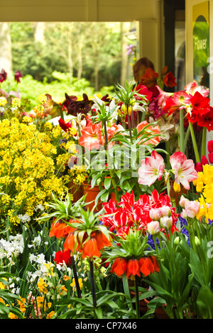 Flower shop with lots of beautiful flowers in spring - Stock Photo
