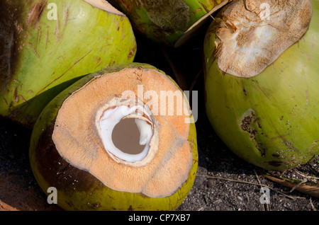 Thailand, Island of Ko Samui (aka Koh Samui). Coconut plantation. - Stock Photo