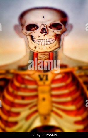 Anatomy, medical illustration of human beings, Aufklappbare anatomische, medizinische Darstellung des Mannes, digital - Stock Photo
