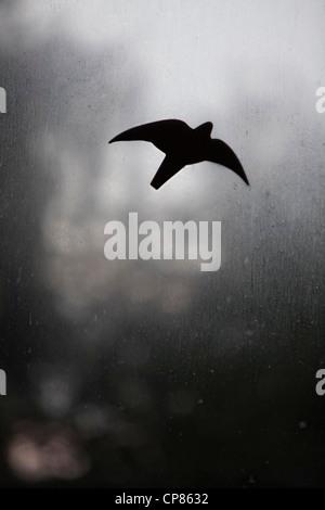Ein Vogel aus schwarzer Folie klebt auf einer schmutzigen und beschlagenen Glasscheibe - Stock Photo