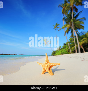 Tropical paradise in Maldives with starfish on a beach and turquoise sea - Stock Photo