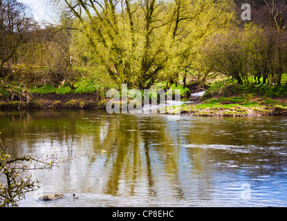 Dinckley Brook meets the mighty Ribble - Stock Photo
