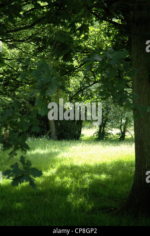 Sussex countryside on a sunny day. - Stock Photo