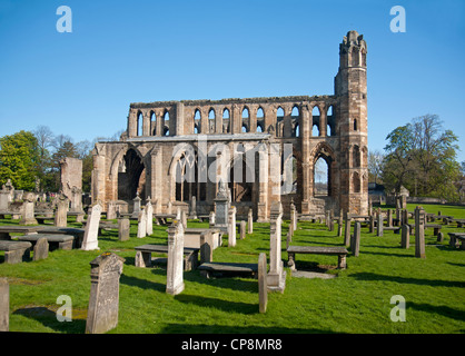 Elgin Cathedral, Moray, Grampian Region. Scotland.  SCO 8216 - Stock Photo