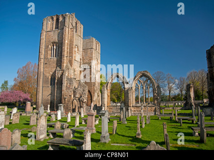Elgin Cathedral, Moray, Grampian Region. Scotland.  SCO 8218 - Stock Photo