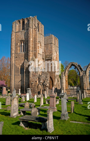 Elgin Cathedral, Moray, Grampian Region. Scotland.  SCO 8219 - Stock Photo