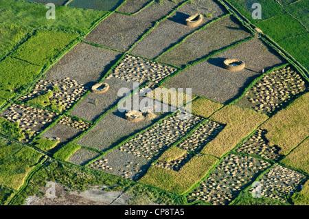 Harvesting paddy rice fields, aerial view, Arusha Region, Tanzania - Stock Photo