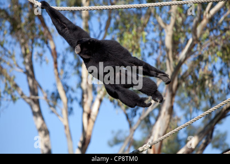 Western Plains Zoo, Dubbo, NSW, Australia - Stock Photo